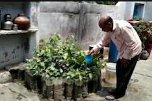 मिलिए झुंझुनू के 'पीपल बाबा' से, 46 साल से तैयार कर रहे पीपल के पौधे