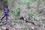 असम के नगांव में आकाशीय बिजली गिरने से 18 हाथियों की मौत