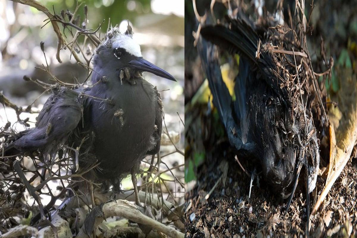 अपनी डाल पर बैठने वाली हर पक्षी को मार डालता है ये पेड़, लोग बुलाते हैं 'चिड़ियों का हत्यारा'