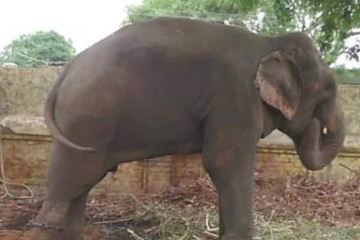 elephant mitthu3