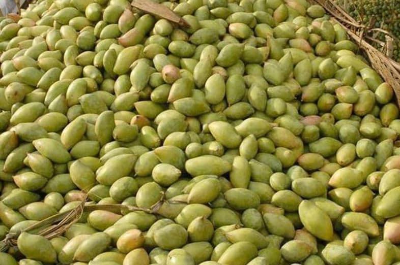 bihar news, bihar samachar, mango production in india, mango production in bihar, बिहार न्यूज़, बिहार समाचार, आम की पैदावार, आम का उत्पादन