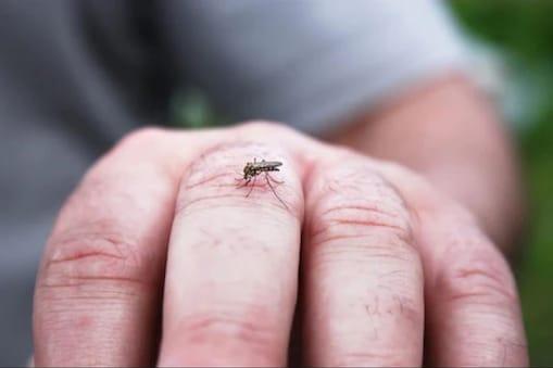 मानसून आने के बाद कोरोना के अलावा अब डेंगू, मलेरिया और चिकुनगुनिया भी चुनौती बन सकते हैं.  (File Photo)