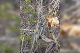 पेड़ पर लटके थे बहुत सांप, एक-दूसरे से लिपटे आए नजर, VIDEO देख उड़ जाएंगे होश