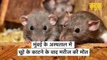 Mumbai के अस्पताल में आंख पर चूहे के काटने के बाद मरीज की मौत, मेयर ने दिए जांच के आदेश | KADAK