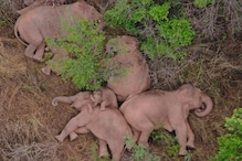 चीन में इन हाथियों पर सबकी नजर, 500 KM की यात्रा कर एक लाख डॉलर का नुकसान किया