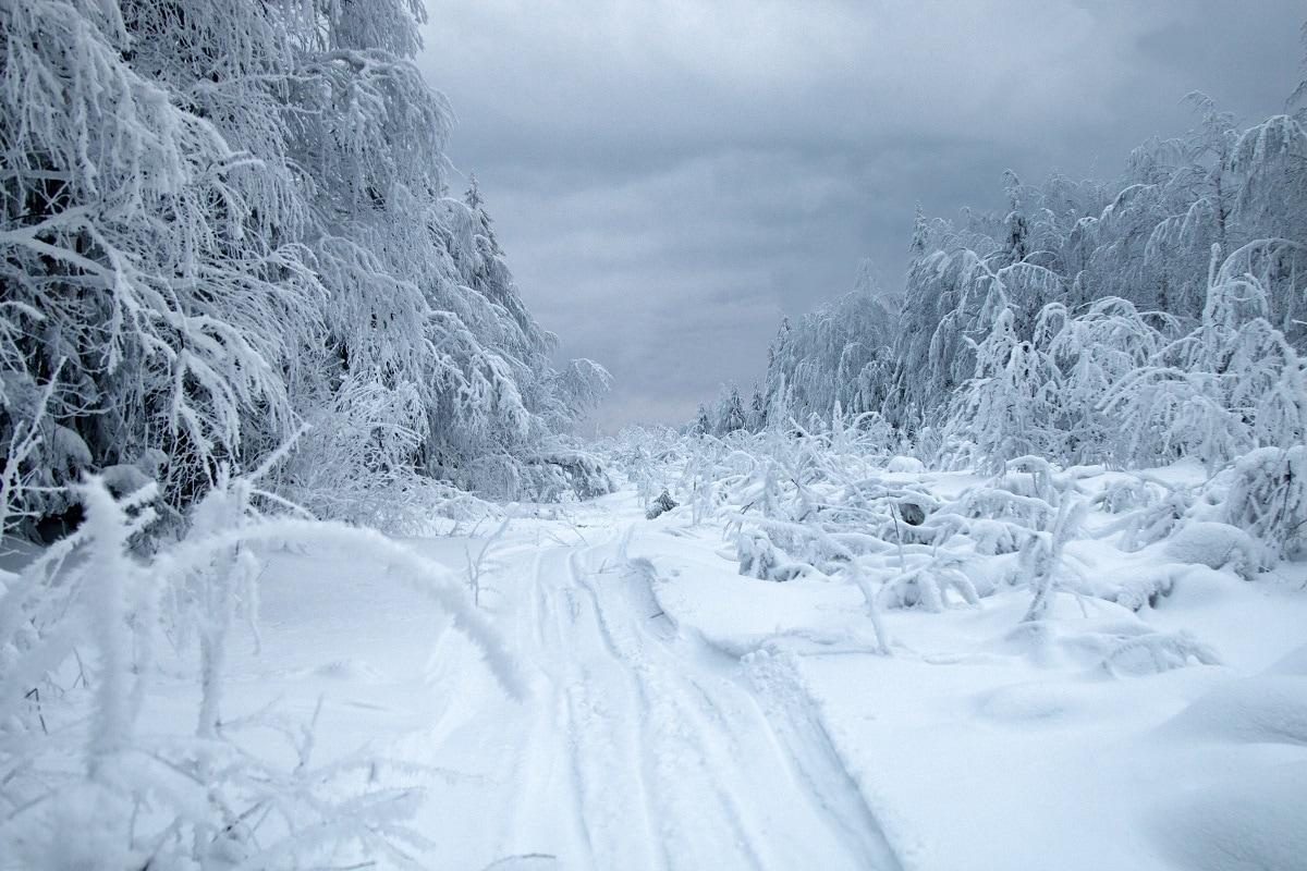 Environment, Russia, Siberia, Arctic, Siberia Permafrost, Rotifers, Cloning, Hibernation,