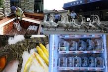 ऐसा देश ...जहां वेंडिंग मशीन उगलती है ज़िंदा केकड़े, मॉल में बिकते हैं मगरमच्छ
