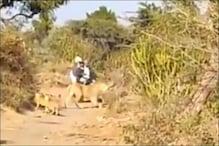 Video: जंगल से जा रहे थे बाइक सवार, तभी सामने आ गया शेरों का झुंड और फिर...