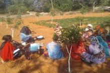 झारखंड: दीदी बाड़ी, दीदी किचन के बाद अब दीदी बगिया, महिलाओं को मिलेगा रोजगार