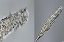 गजब ! 24 हजार साल तक बर्फ में दबा रहा फिर भी निकला ज़िंदा, वैज्ञानिक हैरान !