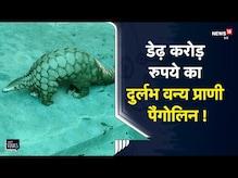 वन विभाग ने 1.5 करोड़ की कीमत के दुर्लभ वन्य प्राणी Pangolin को तस्करों से कराया आजाद    ViralVideo