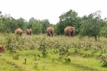Musical Forest: जंगल में हाथियों का 'आर्केस्ट्रा प्रोग्राम' देखें वीडियो
