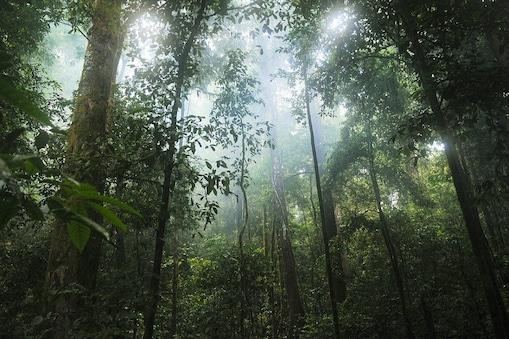 शोधकर्ताओं ने सैटेलाइट के जरिए पृथ्वी के जंगल (Forest) वाले इलाकों का अध्ययन किया.  (प्रतीकात्मक तस्वीर: Pixabay)