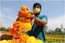 गेंदा के फूल की खेती से हर साल कमा सकते हैं ₹15 लाख! जानें कितना आएगा खर्च