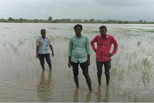 किसानों के मुताबिक पिछले साल बारिश नहीं होने से खेतों को पड़त (खाली) रखा गया था. इस बार अधिक बारिश होने से फसलें बर्बाद हो गई हैं.