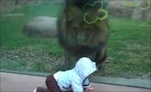 बच्चे को देखकर शेर के मुंह में आ गया पानी, Video देखें शिकारी ने फिर क्या किया