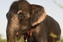 अंधी 'नीना' से मंगवाते थे भीख, Bollywood Stars की मदद से पहुंची हाथी अस्पताल