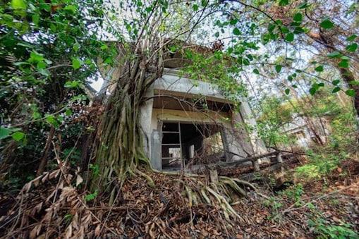 जंगलों के बीच में Haunted Houses की एक पूरी सीरीज़ है. (Photo Credit- Dax Ward / CATERS NEWS)