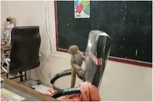 VIDEO: स्कूल खुलते ही बंदरों की एंट्री, प्रिंसिपल की कुर्सी पर जमाया कब्जा