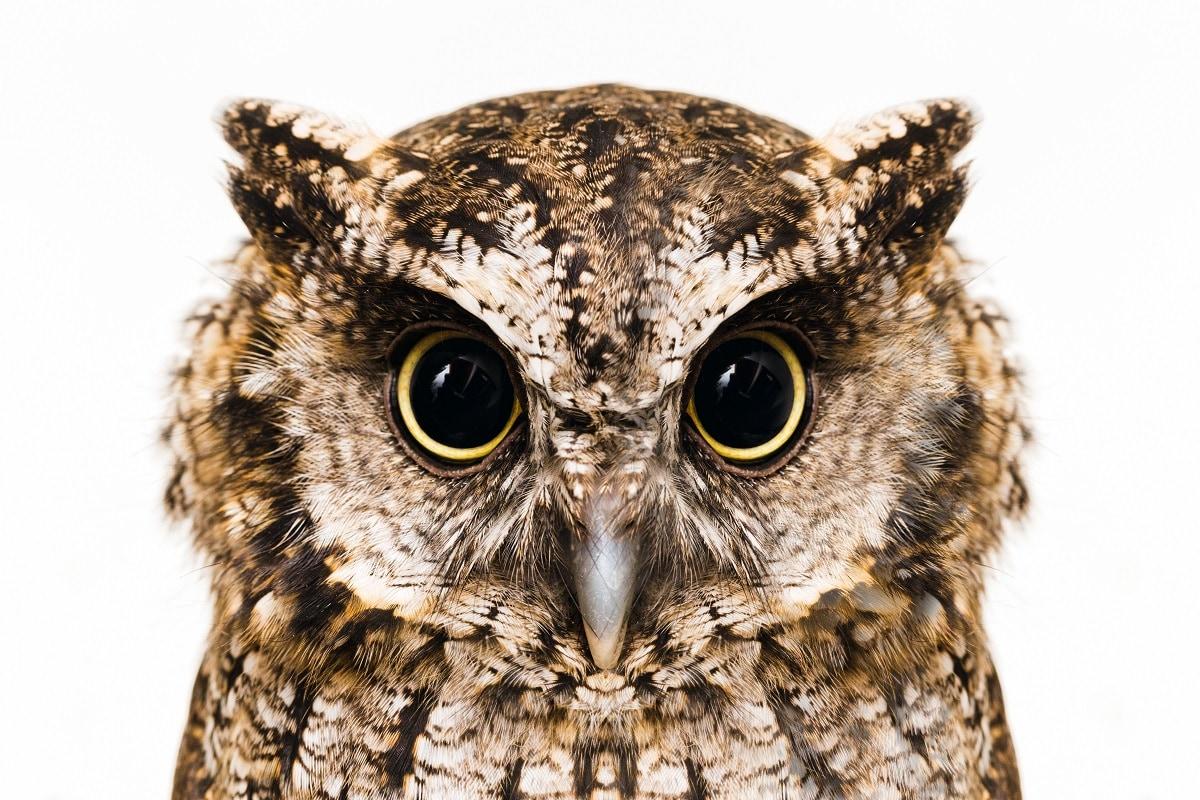इस पर लक्ष्मीजी ने उन्हें चुप कराया और कहा कि प्रत्येक वर्ष कार्तिक अमावस्या के दिन मैं पृथ्वी पर विचरण करने आती हूं. उस दिन मैं आपमें से किसी एक को अपना वाहन बनाऊंगी. कार्तिक अमावस्या के रोज सभी पशु-पक्षी आंखें बिछाए लक्ष्मीजी की राह निहारने लगे.