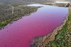 अर्जेंटीना में इस केमिकल ने झील के पानी को कर दिया गुलाबी, परेशान हैं लोग
