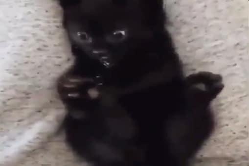 बिल्ली के बच्चे का मजेदार वीडियो सोशल मीडिया पर वायरल हो रहा है (Image-Twitter/ Buitengebieden)