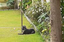 राजस्थान: Pet Lovers सावधान, पांच Dog Breed को पालने पर लग सकता है बैन