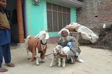 पहल: गाय-भैंस के बाद 7 राज्य बकरियों में शुरू करने जा रहे कृत्रिम गर्भाधान