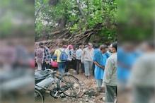 जयपुर में बारिश से धराशायी हुआ बरगद का 100 साल पुराना पेड़, 1 व्यक्ति की मौत