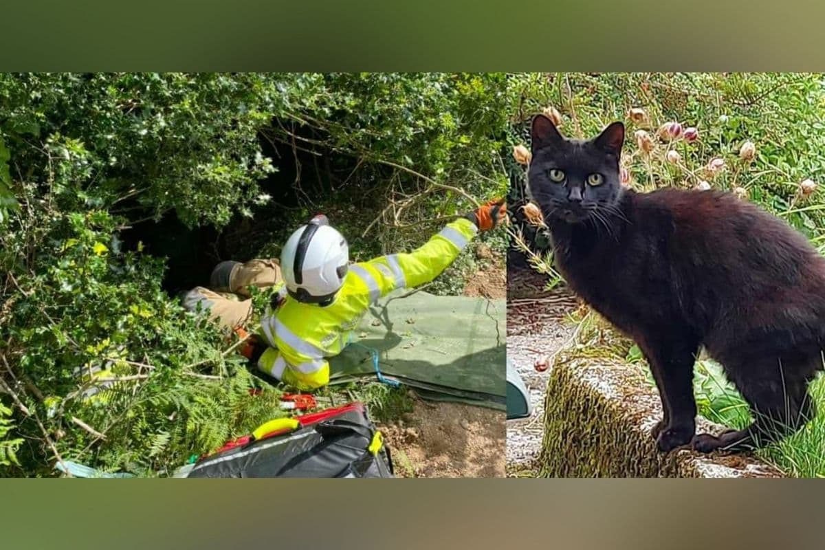 cat saves old woman