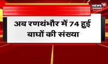 Breaking News   रणथंभौर: बाघिन T105 के साथ नजर आए 3 शावक   News18 Rajasthan