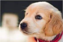 EDMC का बड़ा कदम, पालतू कुत्तों का रजिस्ट्रेशन कराना हुआ अनिवार्य