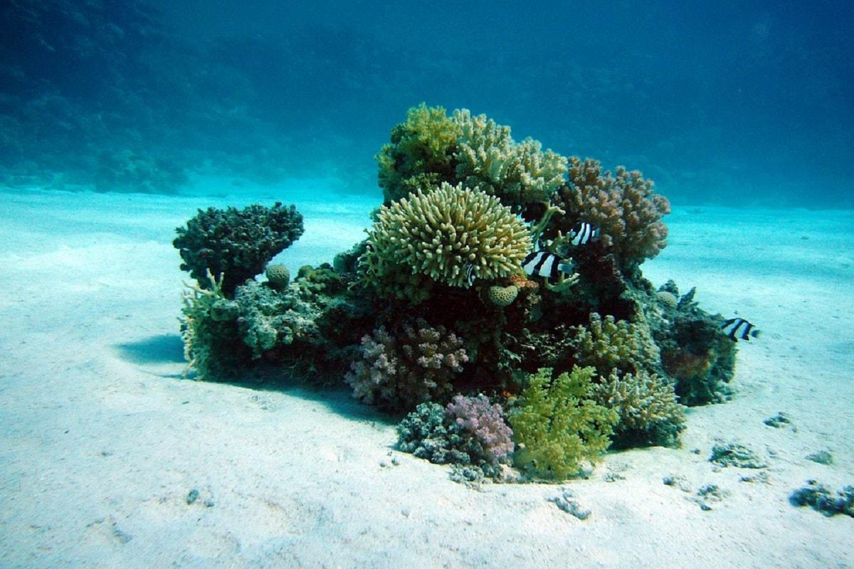 इस अध्ययन के वरिष्ठ लेखक और यूबीसी इस्टीट्यूट ऑफ ओशीन्स एंड फिशरीज के प्रोफेसर विलियम चेयुंग का कहना है कि उनका विश्लेषण दर्शाता है कि वैश्विक स्तर पर मूंगे की चट्टानों (Coral Reef) की पारिस्थितिकी सेवाएं (Ecosystem services) देने की क्षमता भी आधी हो गई है. यह अध्ययन इस बात के महत्व की बात करता है कि हम मूंगे की चट्टानों का, ना केवल क्षेत्रीय स्तर पर, बल्कि वैश्विक स्तर पर भी कैसा प्रबंधन करते हैं. (प्रतीकात्मक तस्वीर: Pixabay)