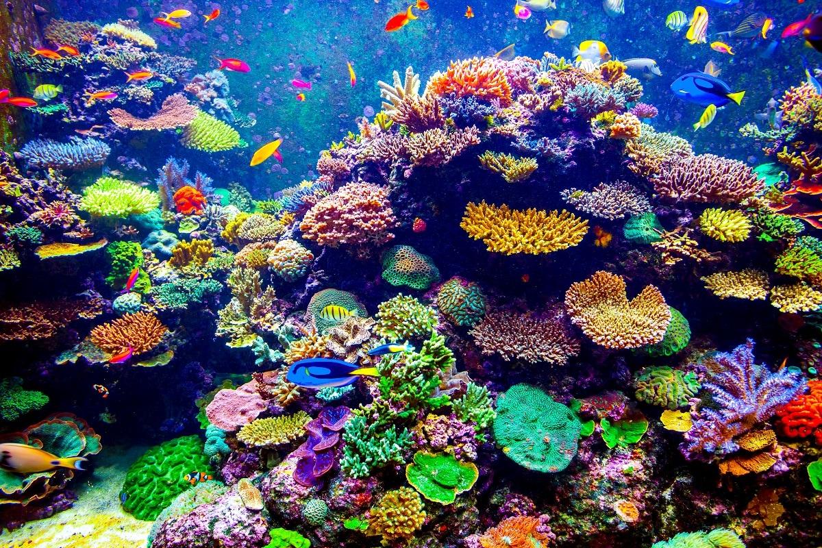 प्रवाल भित्ति जिसे मूंगे की चट्टान या कोरल रीफ (Coral reefs) भी कहते हैं. आज दुनिया भर में इस समुद्री पारिस्थितिकी तंत्र पर अस्तित्व का खतरा मंडराने लगा है. विशेषज्ञों का कहना है कि इसके पीछे की वजह जलवायु परिवर्तन (Climate Change) के साथ ही प्रदूषण और अत्यधिक मत्सयाखेट (Overfishing) जैसे कई बड़े कारक हैं. शोधकर्ताओं ने वैश्विक स्तर पर इन मूंगे की चट्टानों पर जलवायु परिवर्तन के प्रभाव का अध्ययन किया है. इसमें इनकी पारिस्थितिकी सेवाओं, यानि इंसानों के होने वाले फायदे और सेवाएं देने की क्षमताओं, पर हुआ प्रभाव भी शामिल है. इस अध्ययन से पता चलता है कि दुनिया में मूंगे की चट्टानों के प्रसार में बड़ी मात्रा में नुकसान हुआ है जिसके साथ उनकी भोजन और आजीविका प्रदान की क्षमता में भी काफी कमी आई है. (प्रतीकात्मक तस्वीर: shutterstock)