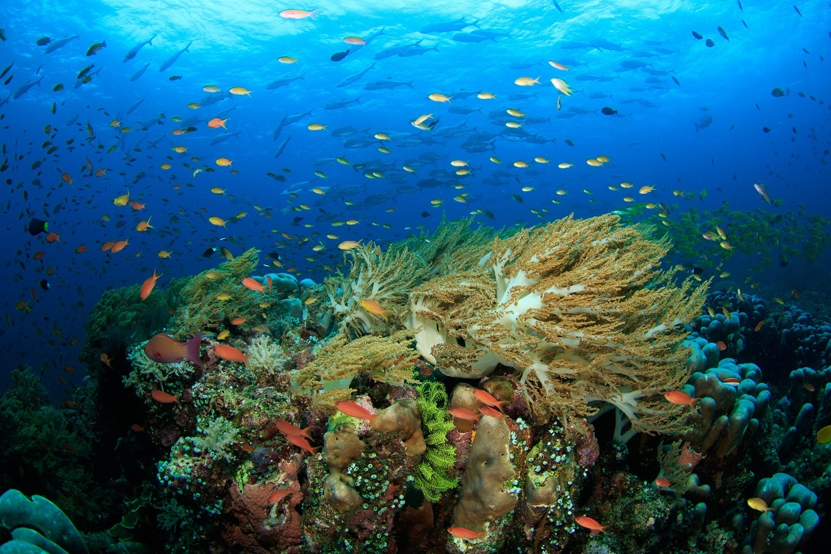 वन अर्थ में प्रकाशित इस अघ्ययन को न्यूफाउंडलैंड की मेमोरियल यूनिवर्सीटी के रिसर्च वैज्ञानिक टेलर एडी ने यह शोध किया है. एडी का कहना है कि मूंगे की चट्टानें (Coral Reef) जैवविविधता (Biodiversity) के लिहाज से बहुत ही अहम आवास के तौर पर जाने जाते हैं. वे खास तौर पर जलवायु परिवर्तन (Climate change) के लिए संवेदनशील होते हैं क्योंकि ऊष्मा इनमें ब्लीचिंग की घटनाओं को जन्म देती है जो इनके लिए बहुत बड़ा खतरा होता है. ये इंसानों के लिए मछलियों के पनपने, आर्थिक अवसर और तूफानों से सुरक्षा जैसी कई पारिस्थितिकी सेवाएं प्रदान करती है. (प्रतीकात्मक तस्वीर: shutterstock)