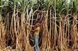 गाजीपुर बॉर्डर पर आंदोलन कर रहे किसानों का कहना है कि गन्ना किसानों को सवा चार सौ रुपये का मूल्य दिया जाए.