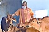 गौ सेवा से लोगों को रिझाएगी योगी सरकार, गोहत्या के खिलाफ कदमों का करेगी प्रचार