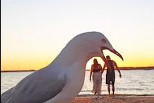 चिड़िया ने बर्बाद कर दिया कपल का रोमांटिक मोमेंट, मोबाइल में रिकॉर्ड हुआ ऐसा पल
