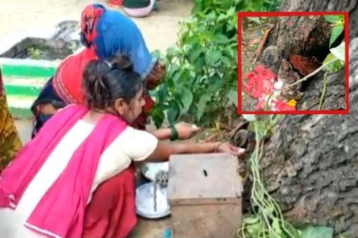 हरदोई के मंदिर में नीम पेड़ों की पूजा करती महिलाएं, जहां देवी मूर्ति के प्रकट होने की बात कही जा रही है. (इनसेट) जिसे लोग बता रहे हैं देवी की मूर्ति.