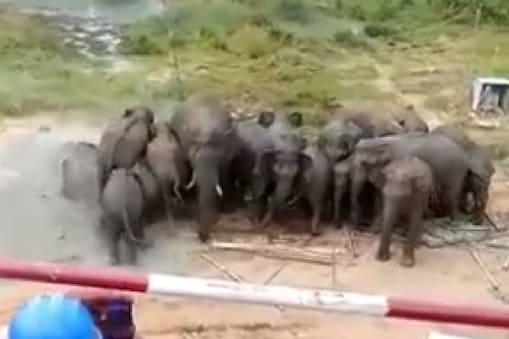 केरल में आईआईटी कैंपस में घुसे हाथी. (Pic- Twitter)