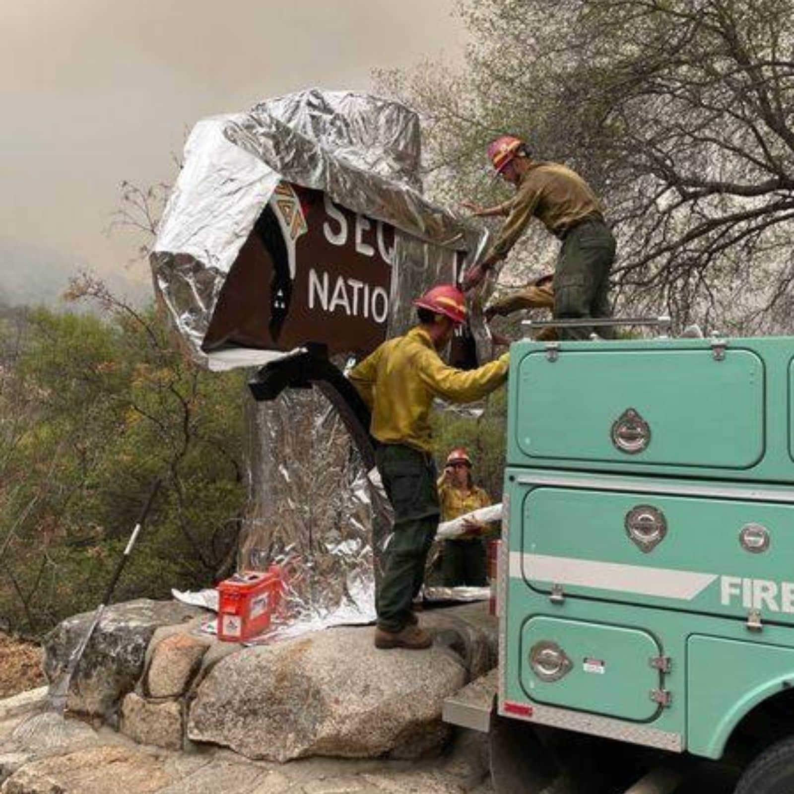 aluminium foil wrapped around world largest tree california