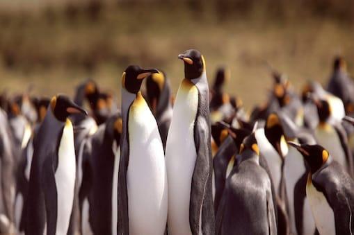 मृत पाए गए संरक्षित पक्षी केप टाउन के पास एक छोटे से शहर सिमोंस्टाउन की एक कॉलोनी के थे.
