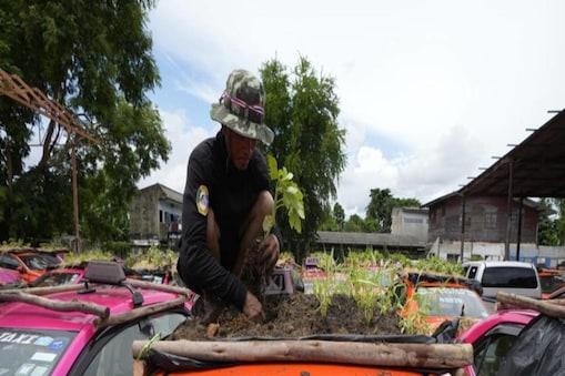 करीब 2 साल से खड़ी टैक्सियों की छत पर ड्राइवर्स ने टेरिस गार्डन (Car roof garden) बना लिया है.