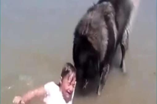 वीडियो (Viral Video) में कुत्ता (Viral Dog Video) अपने मालिक की बेटी को समंदर की लहरों से बचाकर किनारे पर लाता हुआ दिख रहा है.