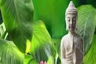Feng Shui Tips: घर में चौड़ी पत्ती वाले पौधे लगाने से घर में आती हैं खुशियां