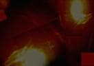 Famous Personalities at Shrines: KCR Prays at Ujjaini Mahakali Temple