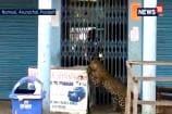 Leopard Enters City Market in Arunachal Pradesh