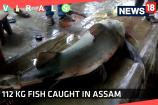 Watch: 112 kG Fish Caught in Assam