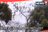 Watch:  This Bihar Village Considers Bats Lucky