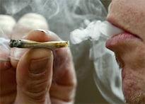 Canada profs win right to smoke pot